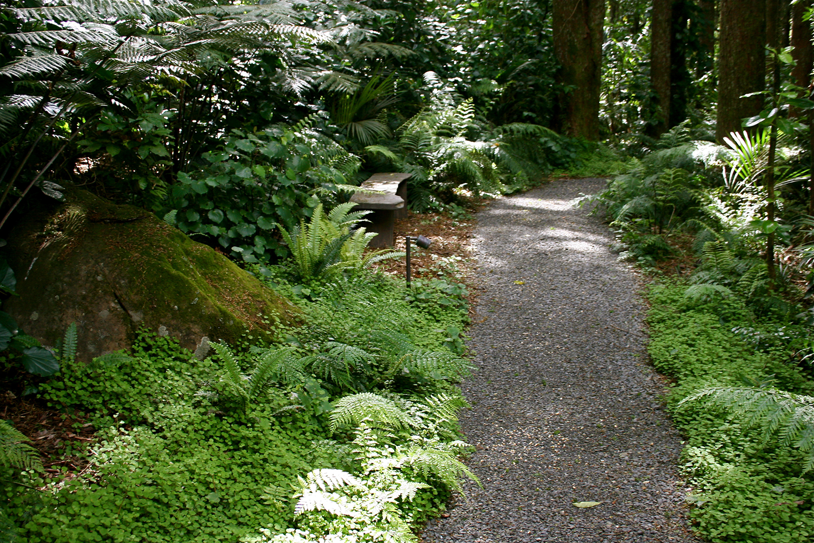 Native plants and ferns at Kauri Cliffs Spa