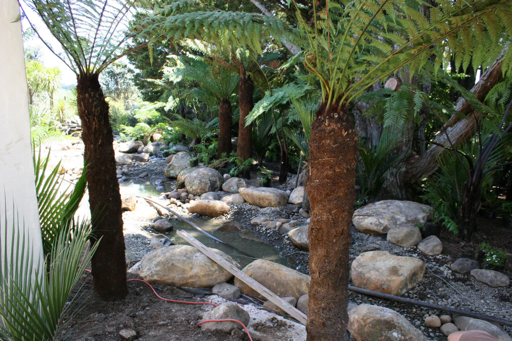 Tree ferns planted around the stream at Kauri Cliffs Spa
