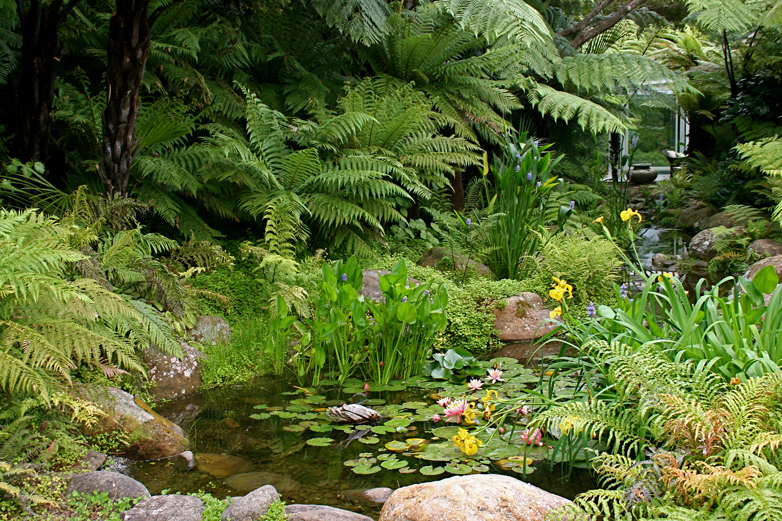 Kauri Cliffs Spa ponds and subtropical plantings