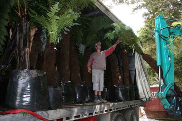 Mature plants arrive at the spa