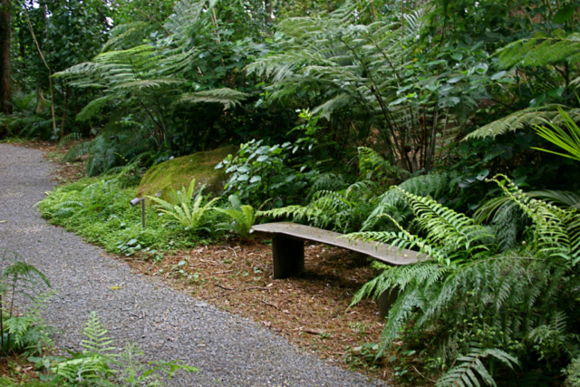 Native plantings by Hawthorn Landscapes