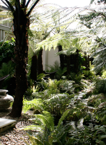 Tree ferns, native plants and local stone at Kauri Cliffs Spa
