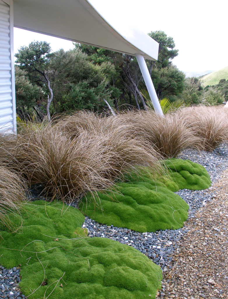 scleranthus moss and tussocks