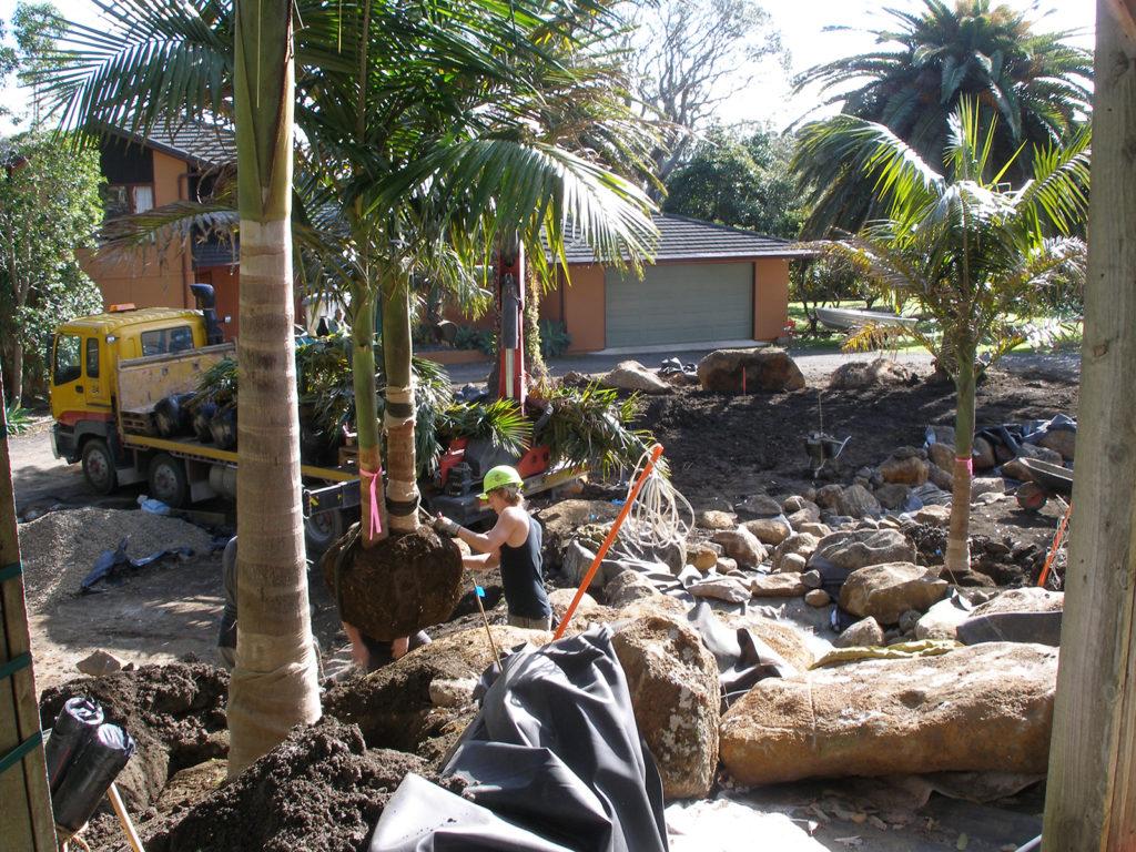 positioning palms