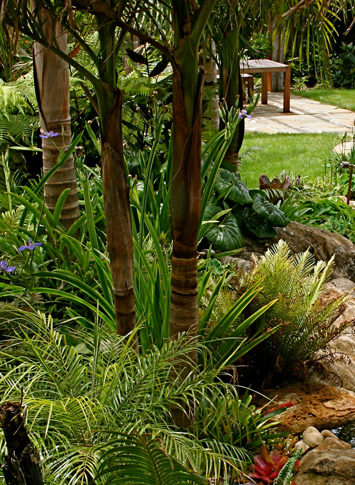 palms and subtropical garden design